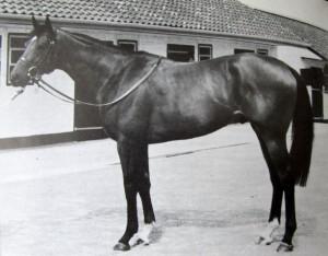 Horse_El_Gran_Senor-_3big