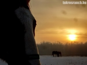 lovak_15